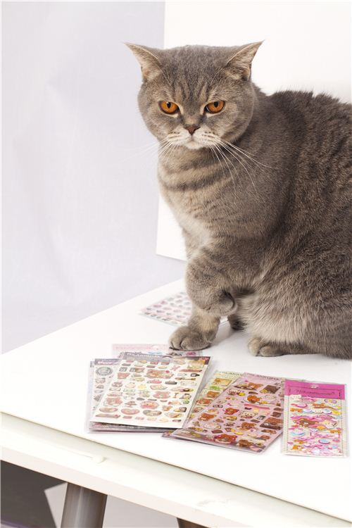 perfect cat posing for the camera with stickers